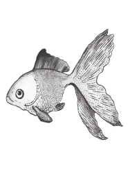 NoD Factory Illustration Fish